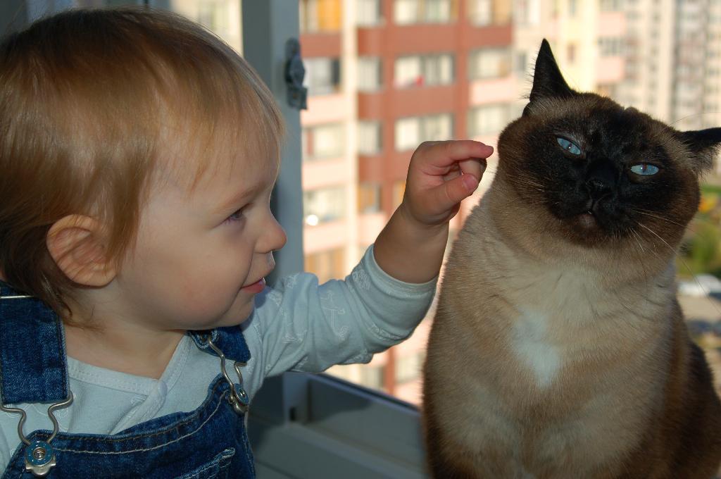 Любопытство. Ребенок и   котенок