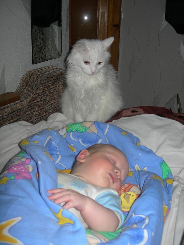 с такой охраной МОЖНО СПАТЬ СПОКОЙНО!. Ребенок и   котенок