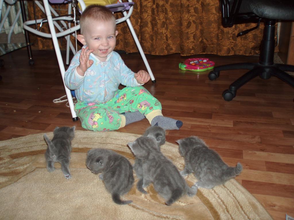 Котики. Ребенок и   котенок