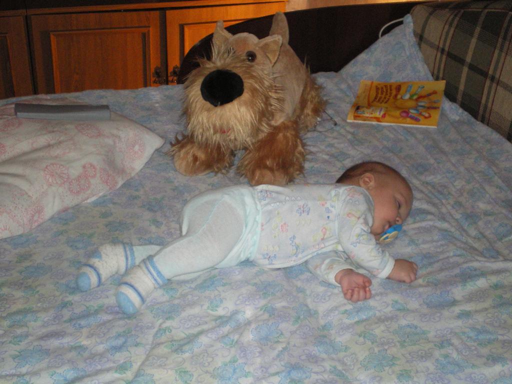 мой любимый пес. Мои игрушки