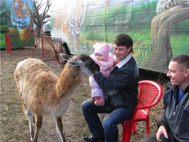 Лама подошла познакомиться:). В зоопарке
