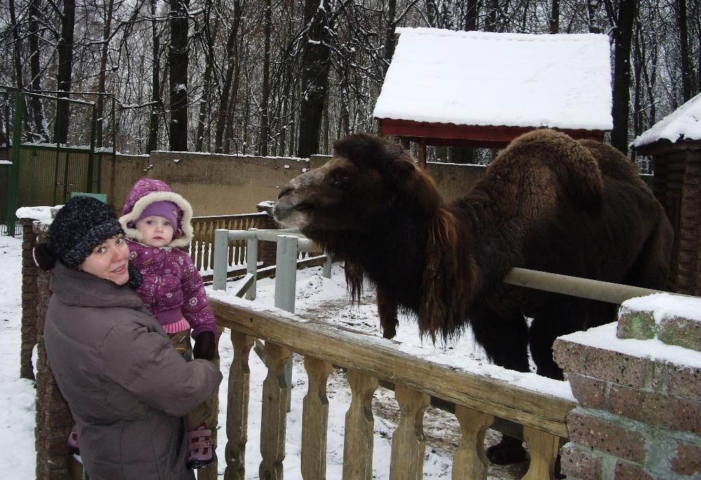 Я верблюда не боюсь, Я с верблюдом подружусь!. В зоопарке