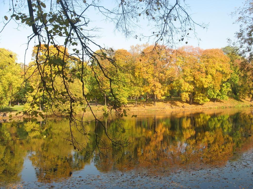 Просто осень :). Блиц: лес