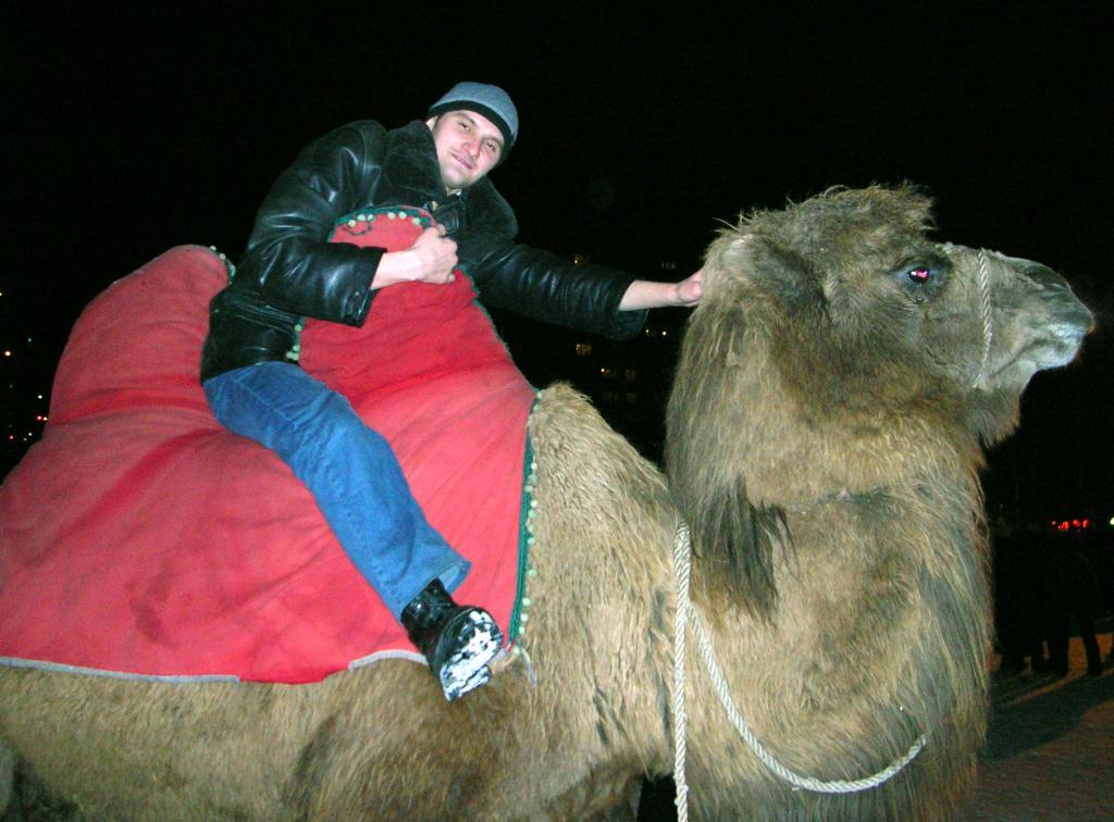 'Я верблюда оседлал, и с него чуть не упал...'. Наши меньшие друзья