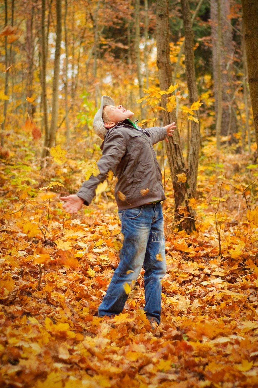 золотые листья. Осенняя прогулка
