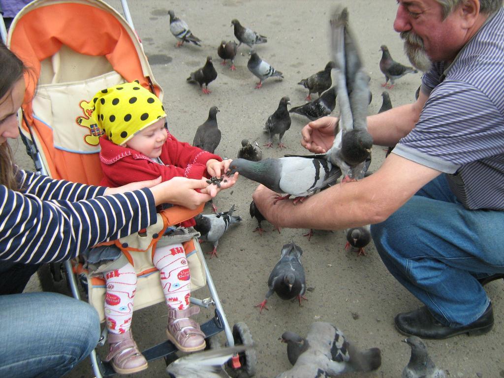 Евангелина и голуби. Наши меньшие друзья