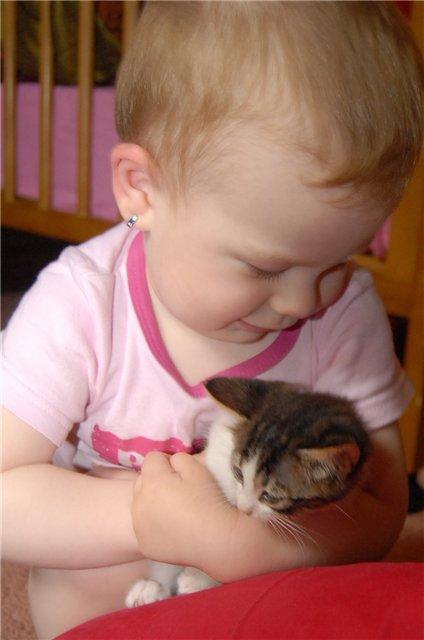 Два котенка. Наши меньшие друзья