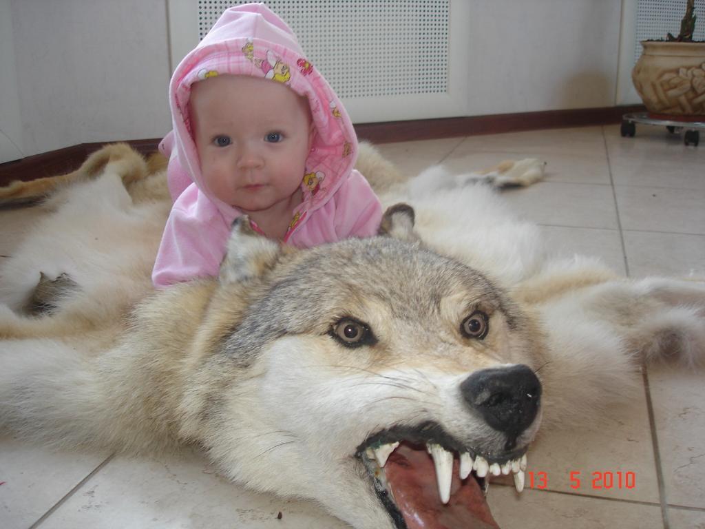 Львица верхом на волке. Малыш на обложку