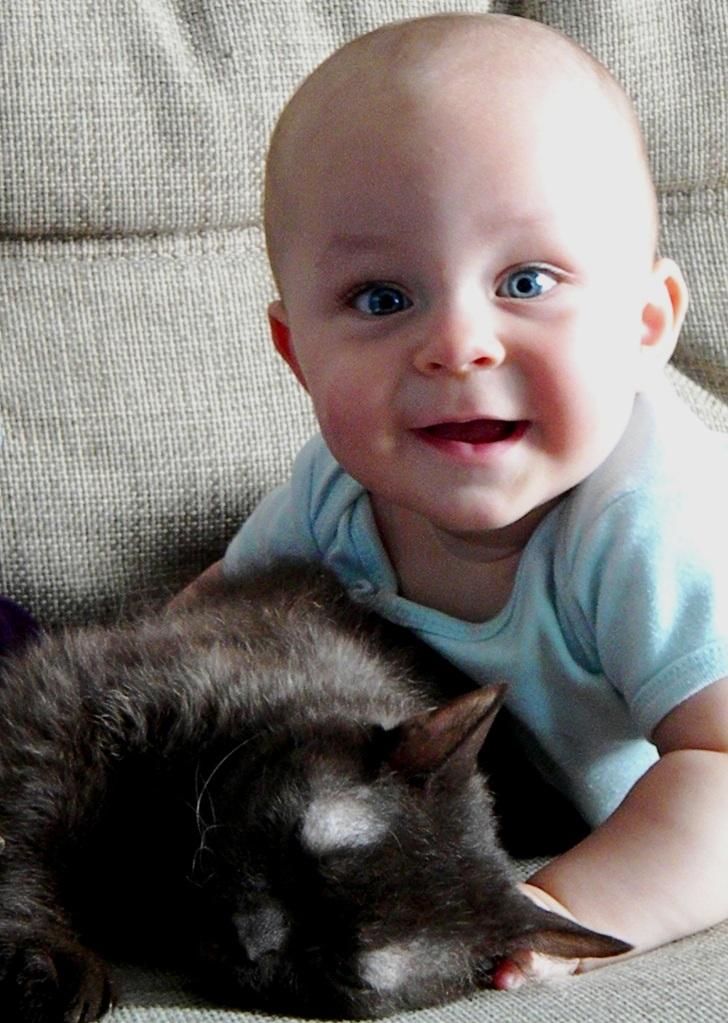 Я кошку не мучаю, я ее люблю!. Наши меньшие друзья