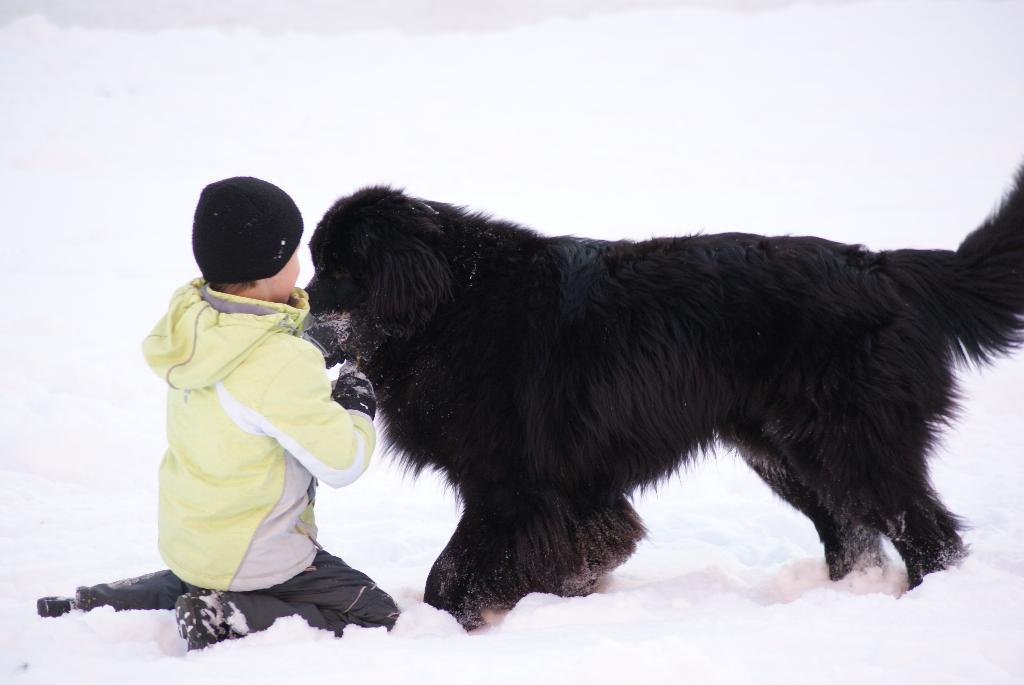 мальчик, собака .... . Наши меньшие друзья