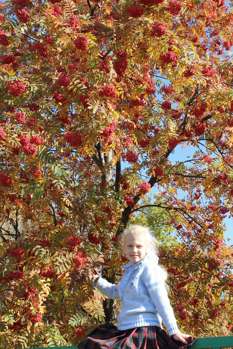 И только гроздья рябины алым огнем горят.... Осенняя прогулка