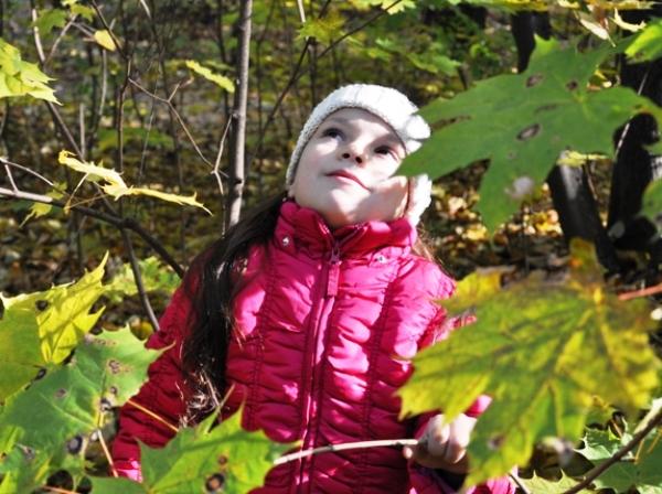 Как же поют птицы в лесу!. Осенняя прогулка