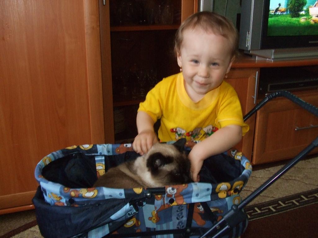Кошка в коляске. Наши меньшие друзья