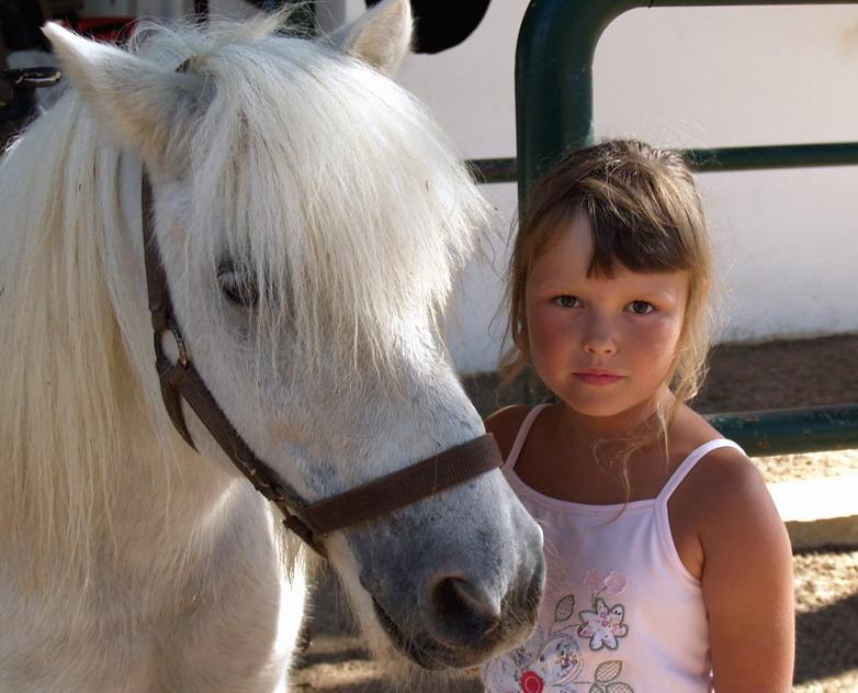 Прекрасней пони зверя нет!. Наши меньшие друзья