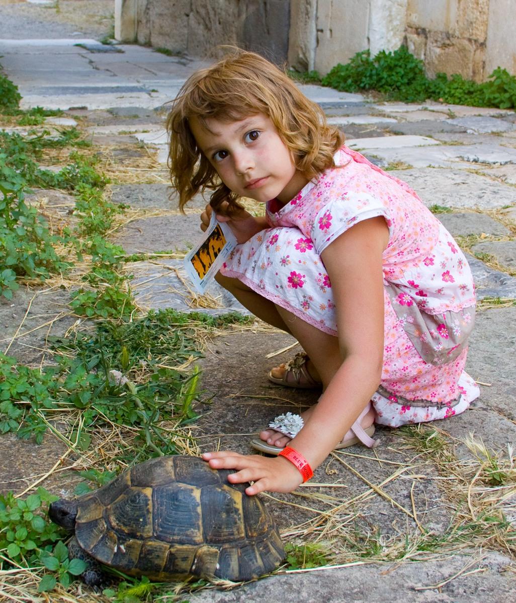 А теперь покатай меня большая черепаха. Наши меньшие друзья