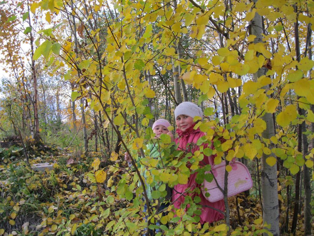 прогулка в осеннем лесу. Осенняя прогулка