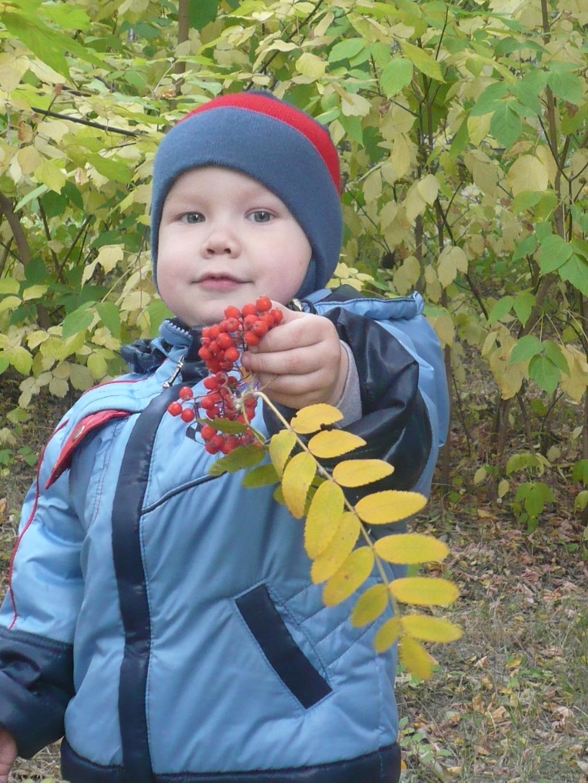 ягода рябина. Осенняя прогулка