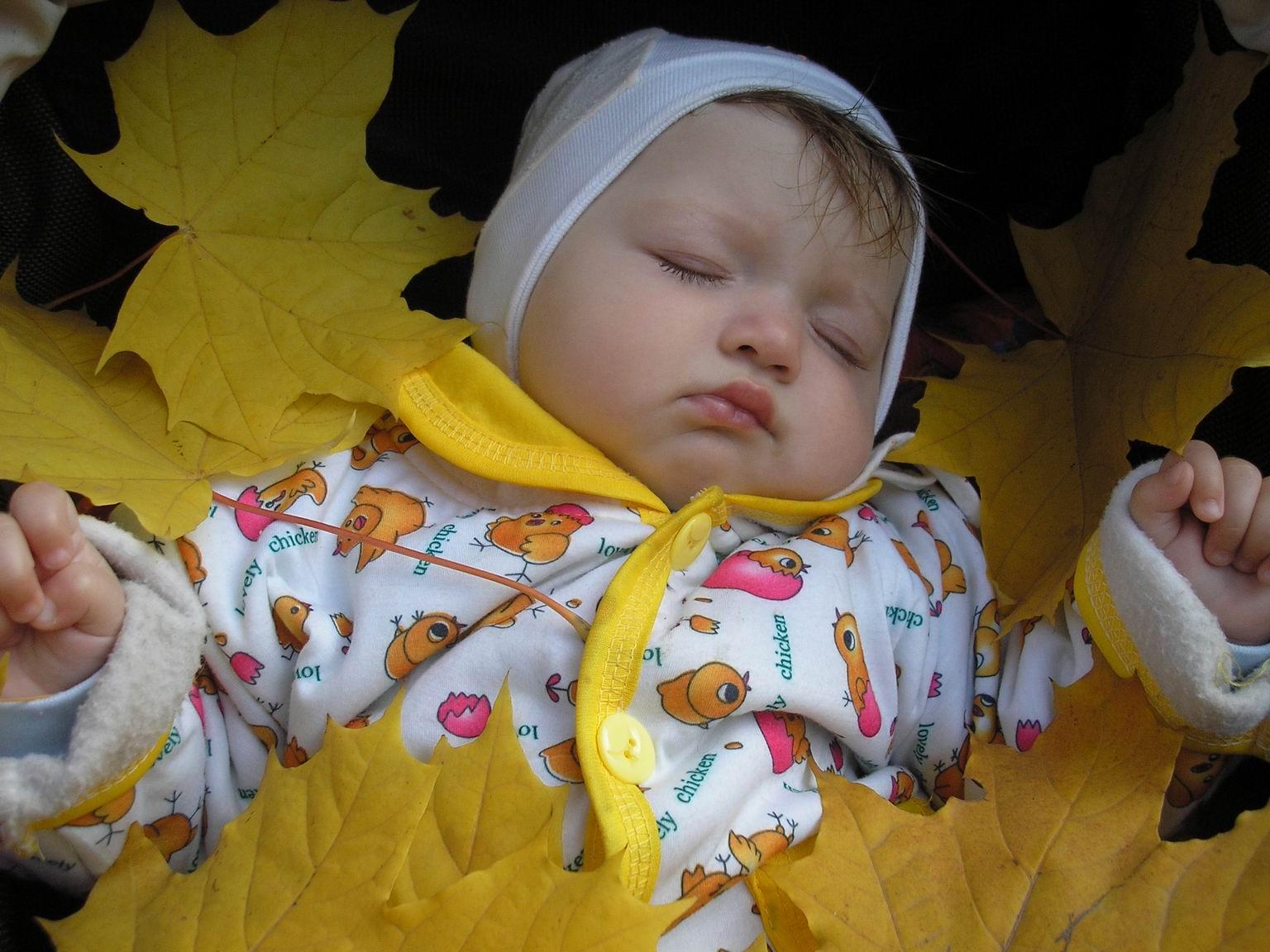 Осень. . Малыш на обложку