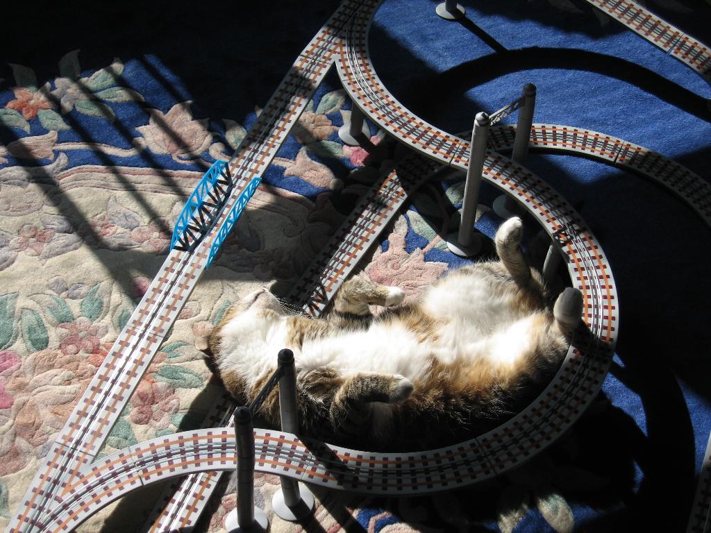 Анна Каренина. Блиц: кошки