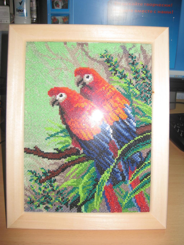 Веселые попугаи. Птицы
