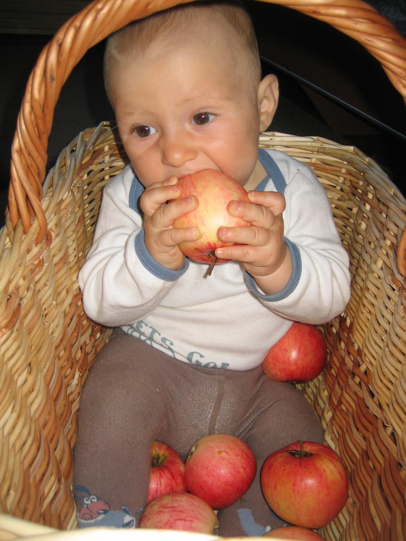 Люблю яблоки,зубов только маловато чтобы их кусать.