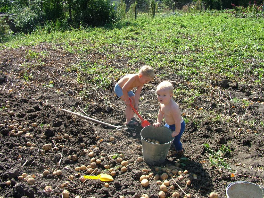 вот, веселые картинки про копание картошки что давайте сюда