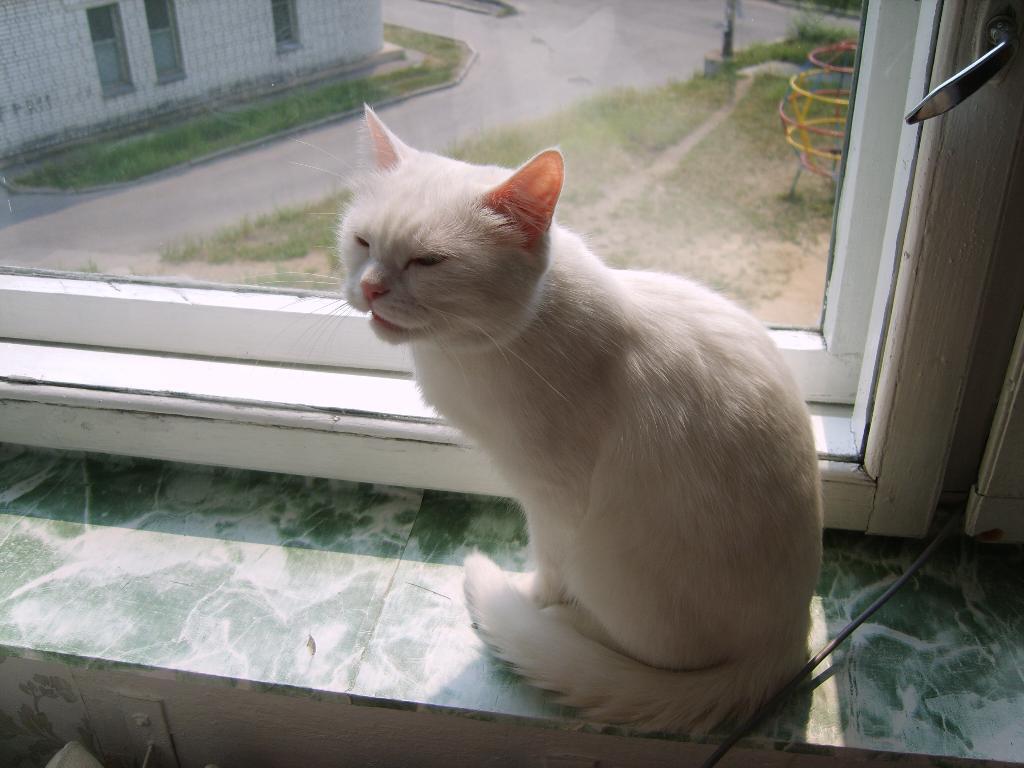 Мася. Кошки