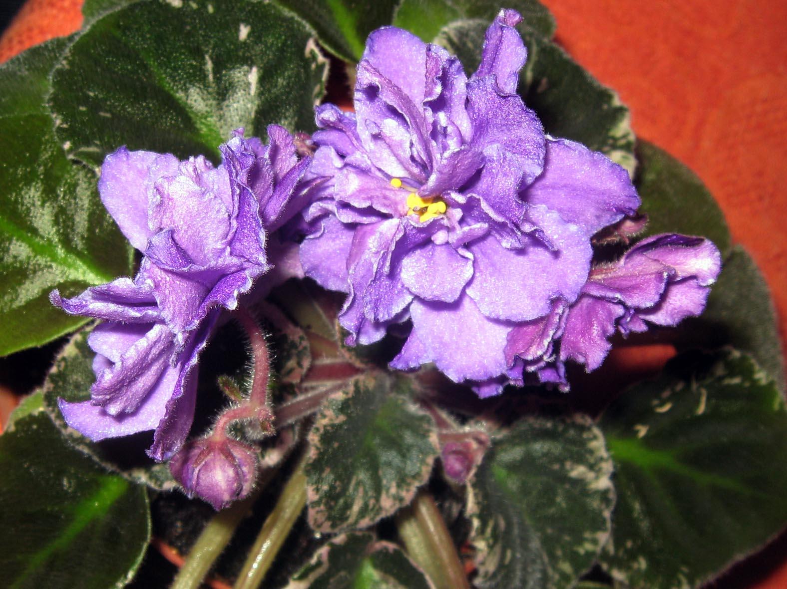 Blackie Bryant. Растения комнатные