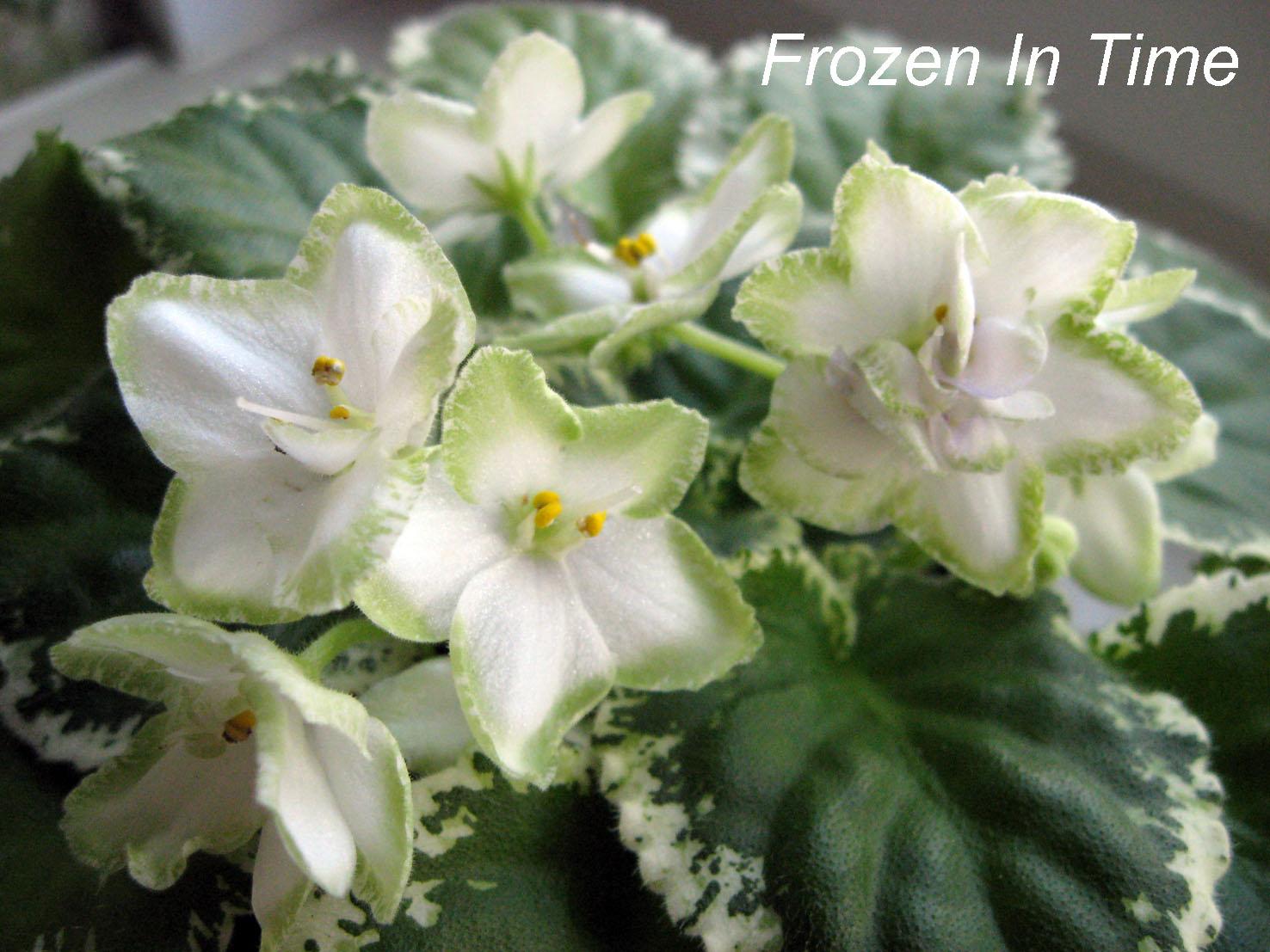 Frozen in Time. Растения комнатные