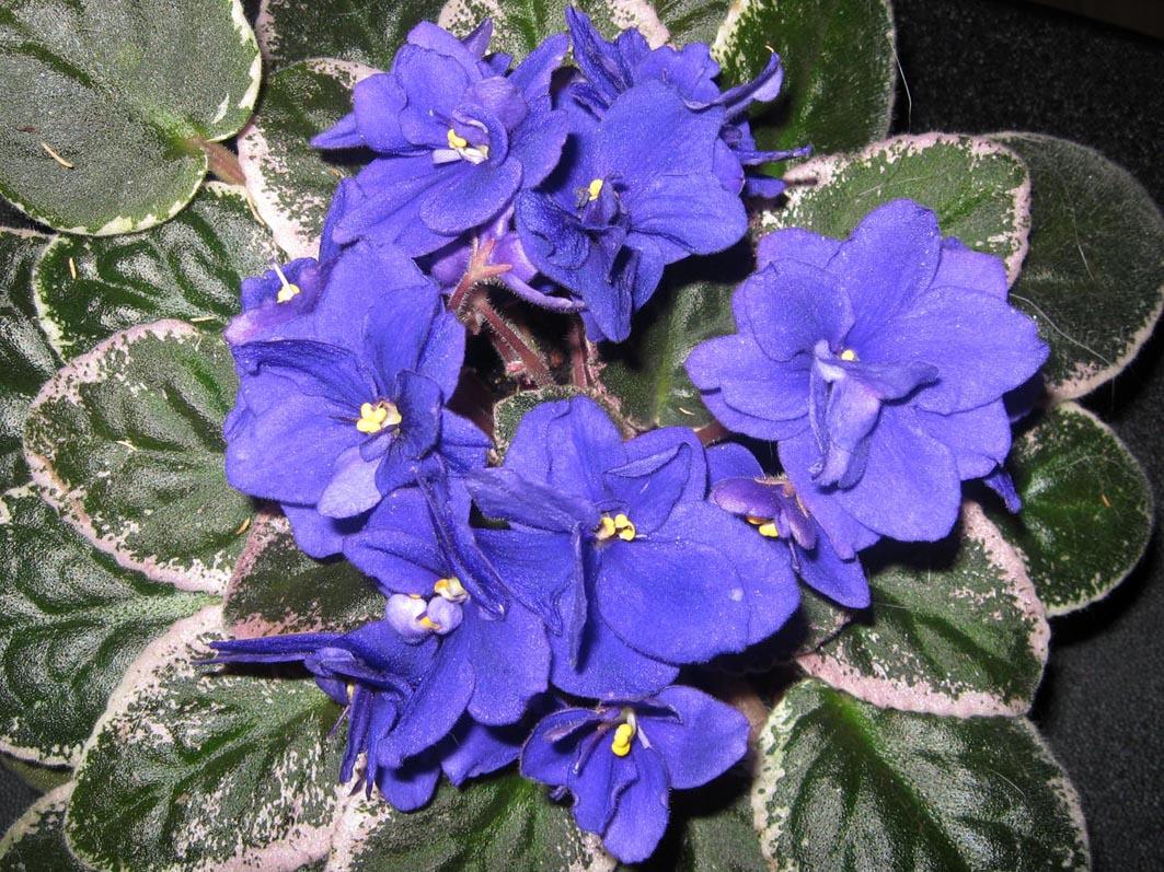Funambule. Растения комнатные