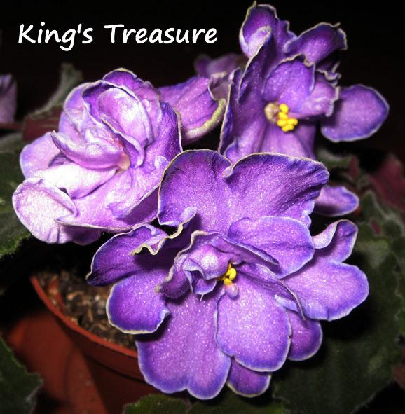 King's Treasure. Растения комнатные