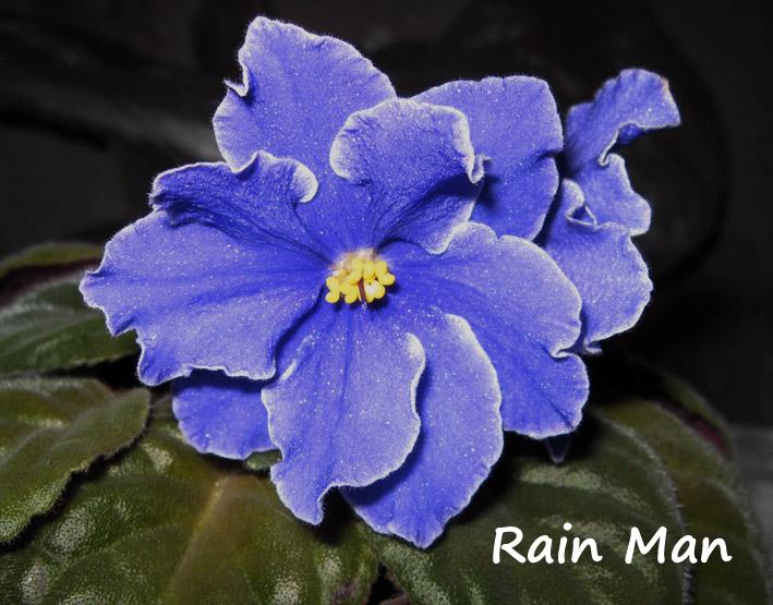 RainMan. Растения комнатные