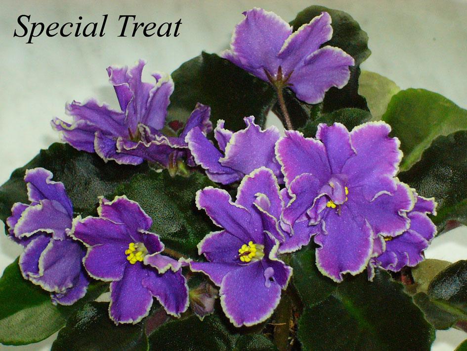 Special Treat. Растения комнатные