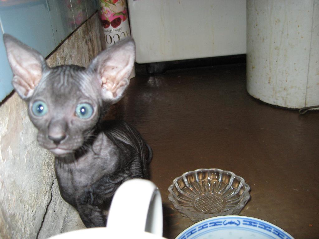 Ричард дель Ирис^  А что вы такое вкусное едите?. Кошки