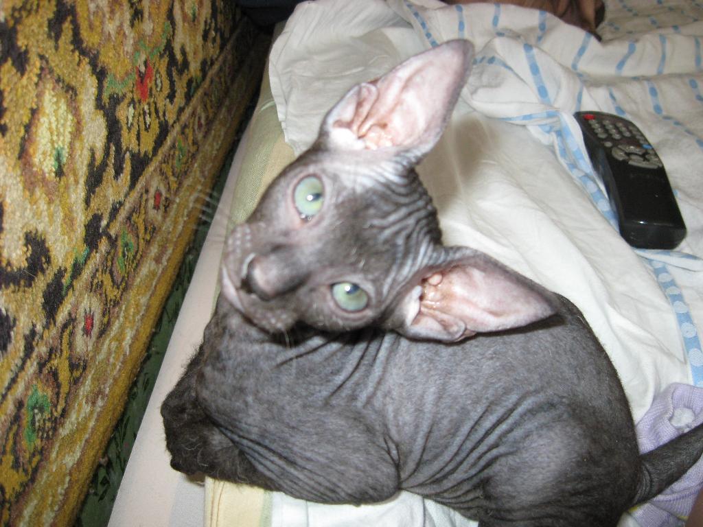 Ричард дель Ирис, 2 мес.. Кошки