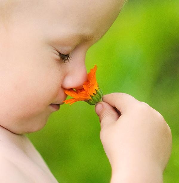 Ароматы детства. Юный натуралист