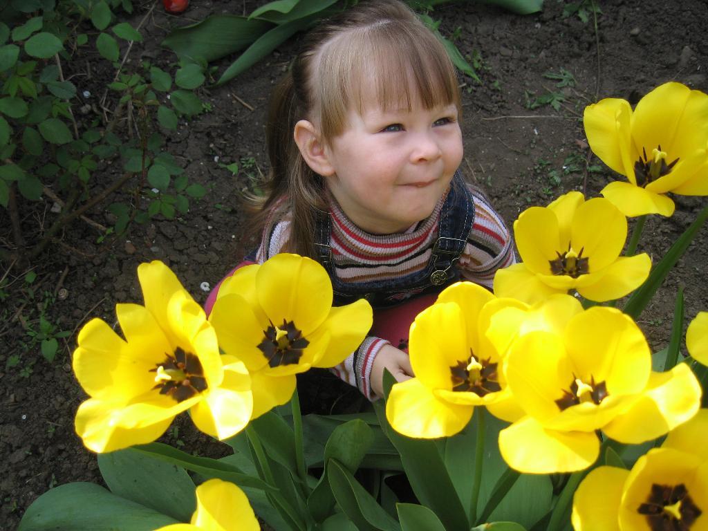 ароматные тюльпаны. Юный натуралист