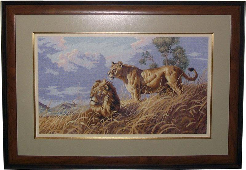 Африканские львы. Животные