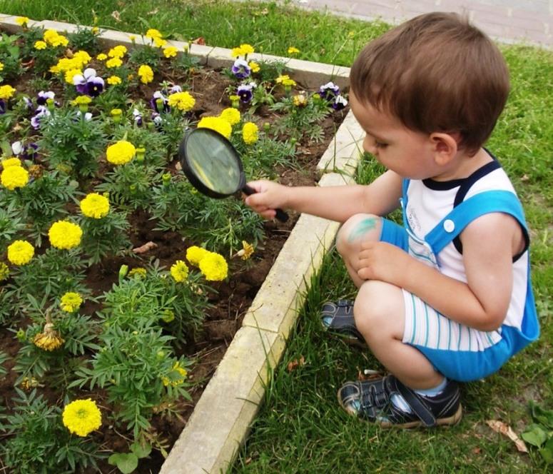 Где тут у вас пестики-тычинки?. Юный натуралист