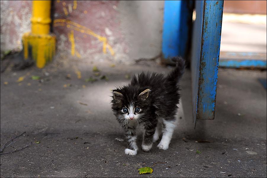 Эй, не стойте слишком близко! . Закрытое голосование фотоконкурса 'Кошки-мышки'