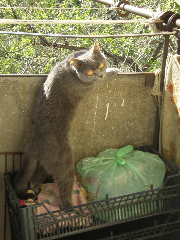 '...Не отвлекайте, я на улицу с верху смотрю...' . Кошки-мышки