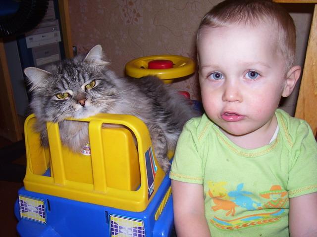 моя-мяууу машина. Кошки-мышки