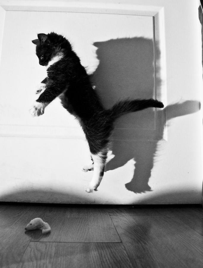 Баксик). Закрытое голосование фотоконкурса 'Кошки-мышки'