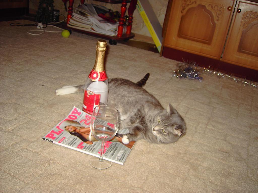 взрослые игры. Кошки-мышки