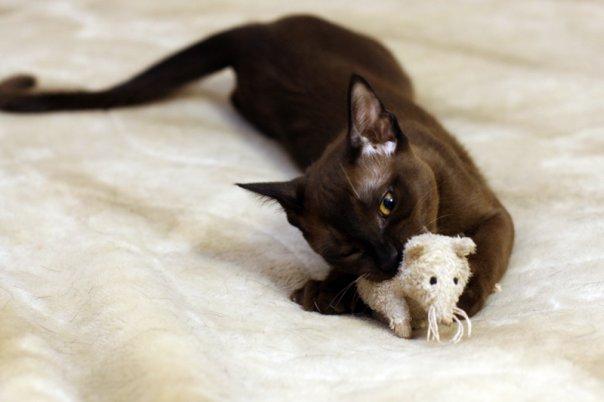 охотник. Кошки-мышки