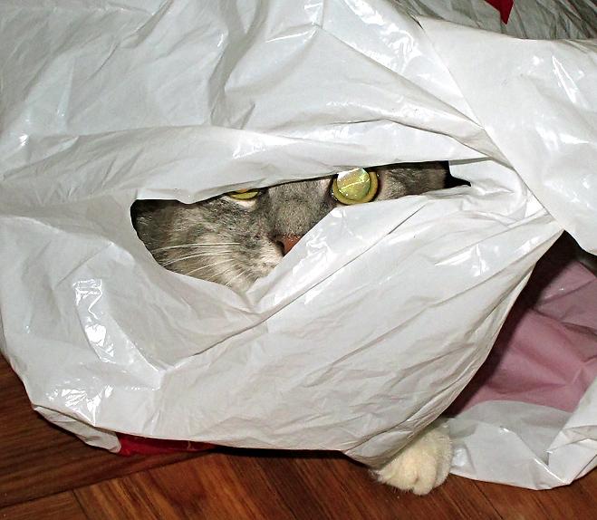 Кошачье счастье.. Кошки-мышки