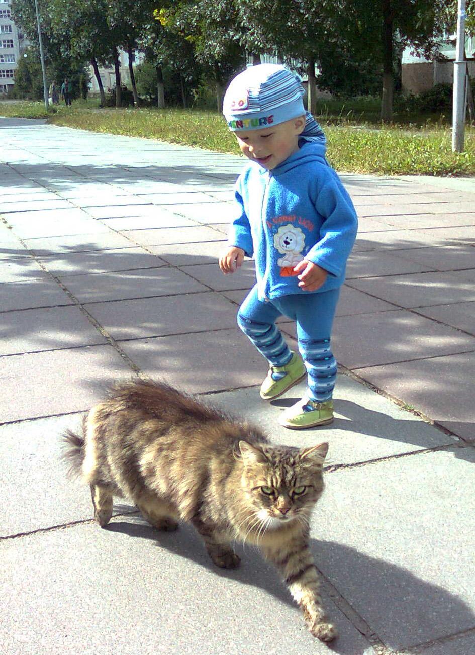 Лучшие друзья.... Кошки-мышки