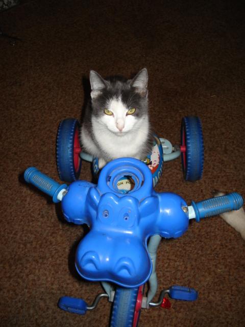 Ну, поехали?. Закрытое голосование фотоконкурса 'Кошки-мышки'