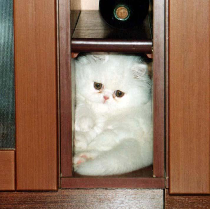 Кто не спрятался,я не виноват!. Кошки-мышки