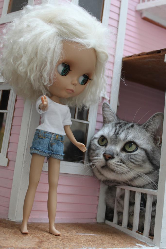 Поиграем, крошка?. Закрытое голосование фотоконкурса 'Кошки-мышки'